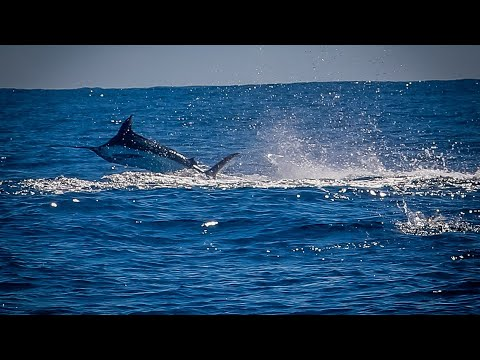 Excited Customers Due To Fishing Marlin | Cabo San Lucas Fishing | Blue Sky Cabo
