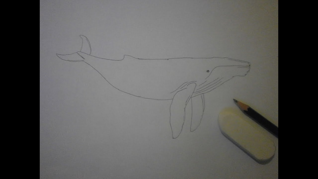 Montage photo kizoa dessin de baleine youtube - Baleine dessin ...