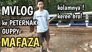 Gambar cover MVLOG KUNJUNGAN KE PETERNAK GUPPY DAERAH BANYUMAS!