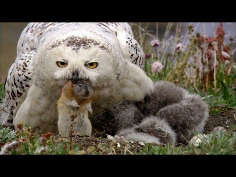 Самые опасные птицы для человека. Остерегайся их!