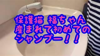 【保護猫の赤ちゃん】子猫の福ちゃん!初めてのシャンプー thumbnail