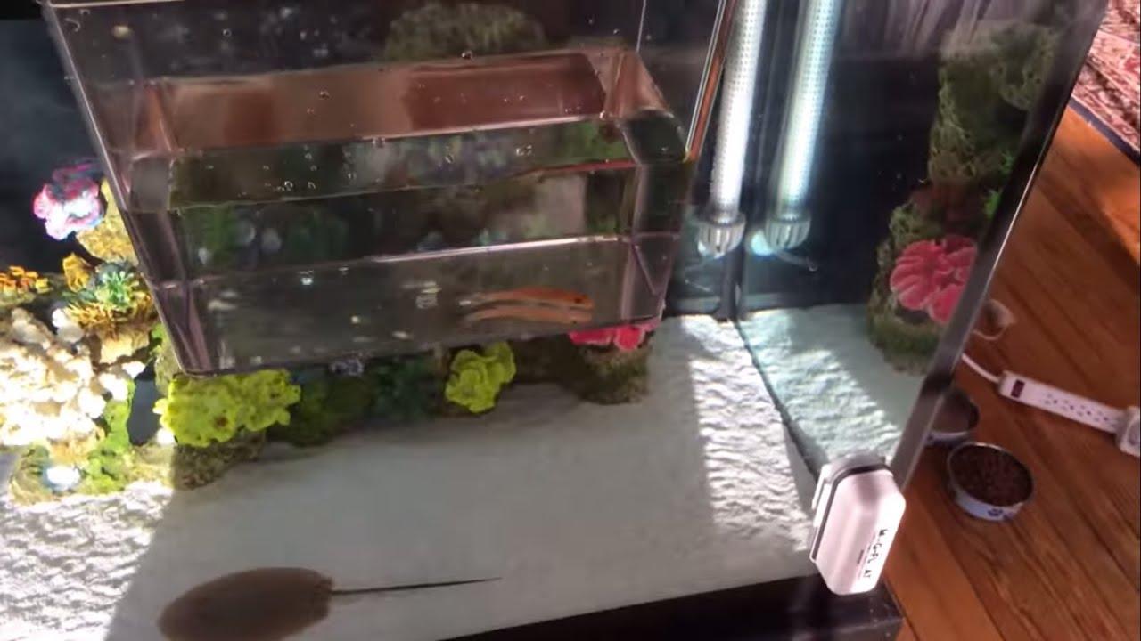 Freshwater fish acclimation - How To Acclimate Freshwater Fish