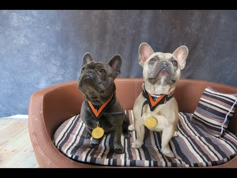 Kiwi & Pablo - French Bulldogs - 4 Weeks Residential Dog Training