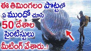 తిమింగలం పొట్టలో ఉన్నదిచూసి బిత్తరపోయిన 50 దేశాల సైంటిస్టులు | Whale swallows Plastic Bags | Sumantv