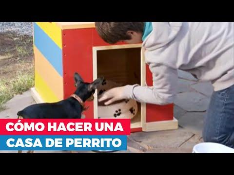 C mo hacer una casa de perro youtube for Construir casa de perro