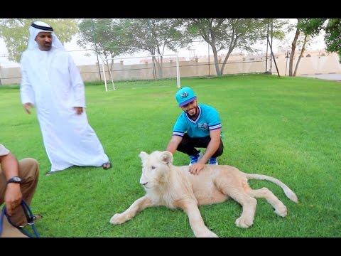 LION ALMOST BIT ME!!!!! (NO JOKE)