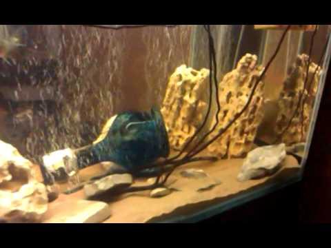 аквариум с цихлами 500литров встроенный в шкаф