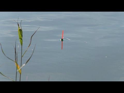 Рыбалка осенью 2018 на Поплавок. Ловля Карася на удочку в Камышах