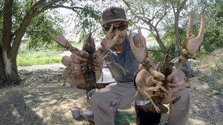 Cangrejos De Rio Con Cerbatana Y Trampa | Caza Y Pesca