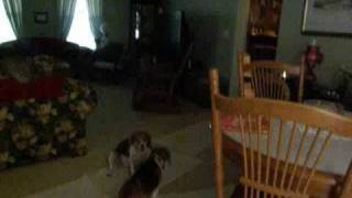 The Noodles Story...the 5 Month Saga Of A Abused Shelter Adoptee.wmv