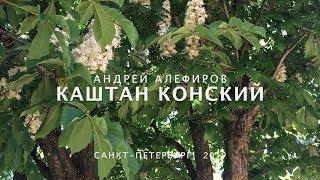 Каштан конский Алефиров А Н