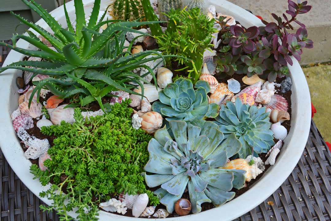 How To Plant Succulents In A Container Garden