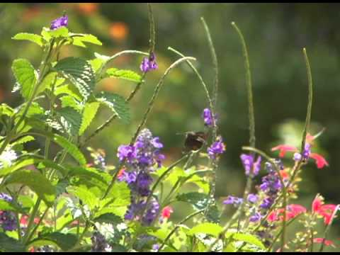 Butterfly Garden At Port St. Lucie Botanical Gardens