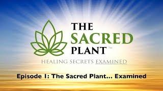 The Sacred Plant: Healing Secrets Examined - Episode 1