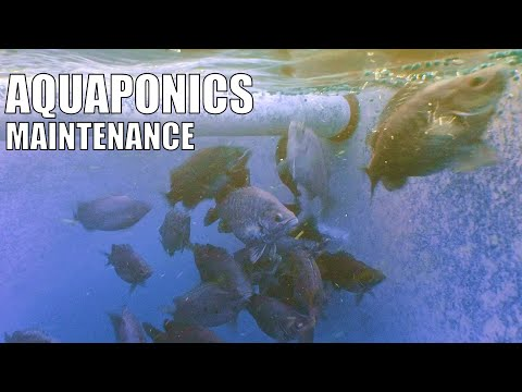 Aquaponic System Maintenance & Running Tips
