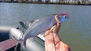 Рыбалка МЕЧТЫ Осенний ЖОР ХИЩНИКА на реке Днестр Ловля ЖЕРЕХА на силикон