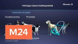 'Москва в цифрах': служебные собаки - Москва 24