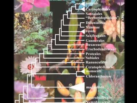 Botany Without Borders