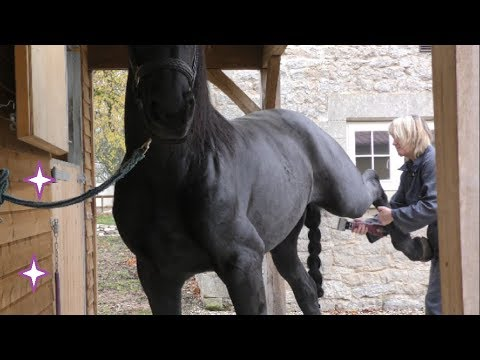 Clipping a Friesian horses head, legs & body