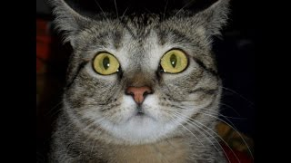 Кошка Никки, 🐈 2 часа после стерилизации и через пол-года.