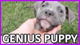 GENIUS PUPPY!!!