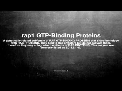 Medical vocabulary: What does rap1 GTP-Binding Proteins mean