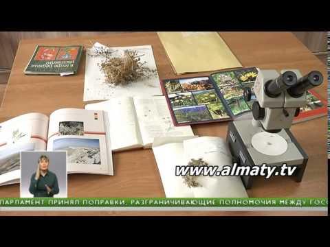 Красная книга растений в Казахстане