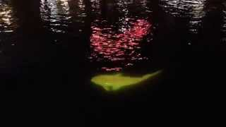 From The Belly Of The Carp: Singapore River aglow with art