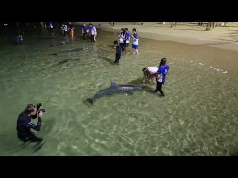 [Best Australia] Feed Wild Dolphins At Tangalooma, Queensland