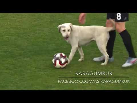 Karagümrük-Giresunspor Maçında sahaya giren köpek