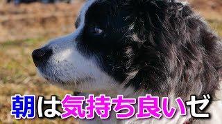 少し前に(四国地方・2月中旬)に撮影しました。我が家の癒し系愛犬ハリ...