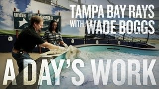 Ta Bay Rays with Wade Boggs A Day 39 s Work