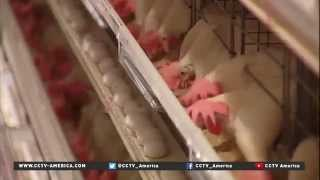 Bird flu in the Midwest causing egg prices to soar