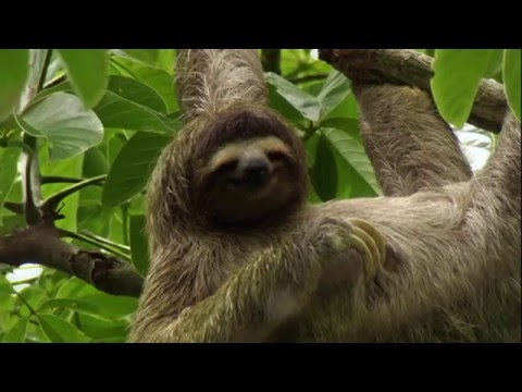 BBC  Как устроена природа - Джунгли - Познавательные и прикольные видеоролики