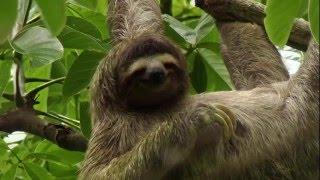 BBC  Как устроена природа - Джунгли