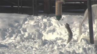 Yankee Flipper Squirrel Proof Birdfeeder