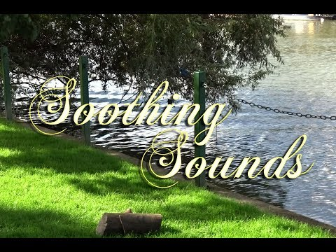 Relaxing Piano Music 🏞 Relaxing Riverside Sounds, Water and