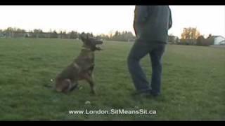 London Dog Training