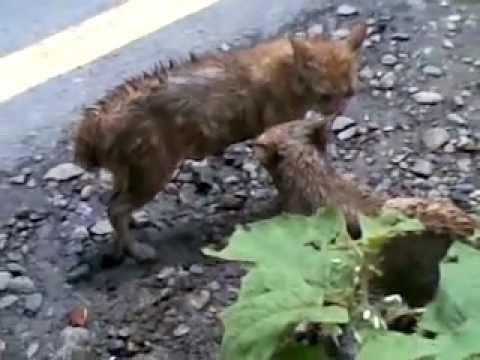 video lucu kucing kampung