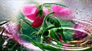 #Релакс.  #Музыка.  #Вода.  #Цветы.  #Природа. #Music.  #Water.  #Flowers.(Релакс. #Музыка. #Вода. #Цветы. #Природа. #Music. #Water. #Flowers Завораживает и успокаивает !!! Смотреть утром для..., 2016-06-16T18:26:08.000Z)