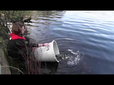 Fish Stocking In The North East