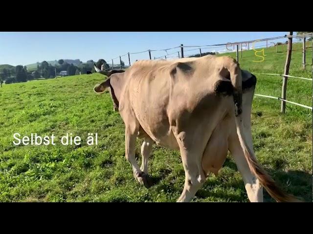 Weidenwechsel der Kühe auf dem enerQi Landgut