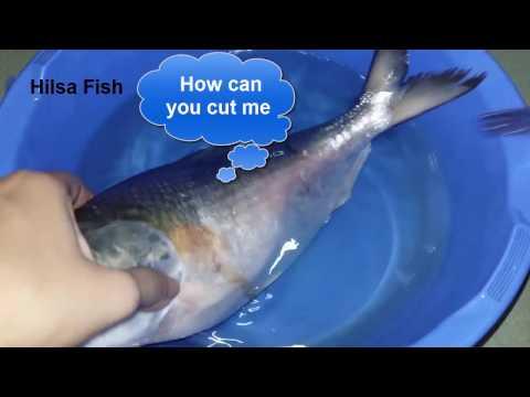 How to cut Hilsa fish // How to cut ilis mach.