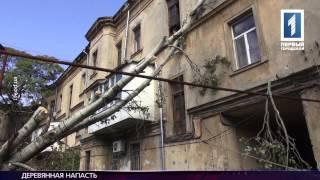 На Мечникова упал огромный тополь(, 2014-09-24T14:05:28.000Z)