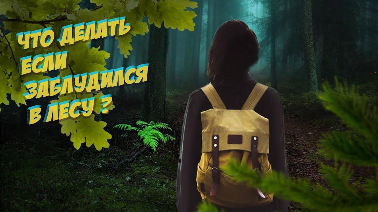 Как не заблудиться в лесу: советы от МЧС