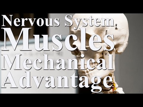 Muscles, the Nervous System, and Mechanical advantage