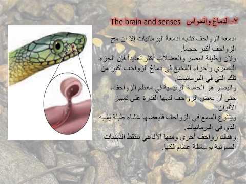 الدرس الأول : الزواحف (الفصل الثاني) أحياء 2