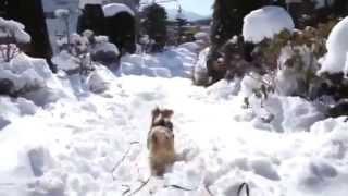 大雪の次の日は快晴〜 雪の感触にテンションUP〜 (2013.1.15)