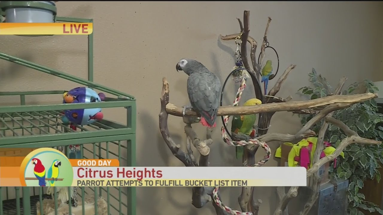 Parrot Rescue: Catch Some Air