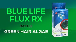 Fluconazole for Green Hair Algae & Bryopsis: How To Treat Your Tank with Flux Rx from Blue Life USA